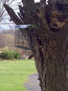Rae bird feeder